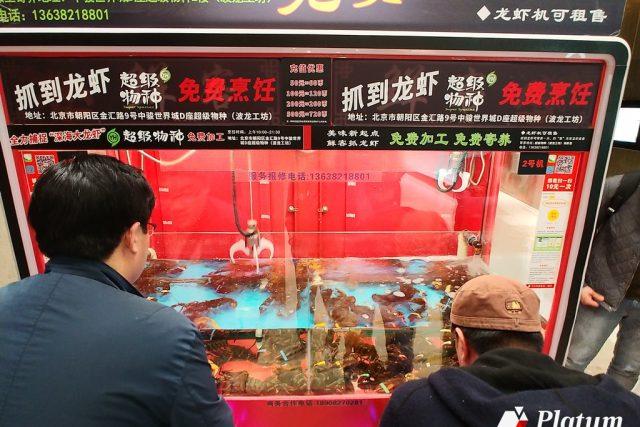[중국타파] 살아있는 랍스터 뽑는 자판기가 있다